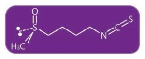 SN-CTP-boletín-ilus-Sulforafan